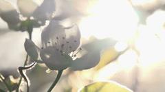 Solar Flower - stock footage