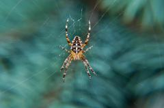 spider on net hanging on the branch - stock photo