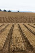Cultivated Farm Land - stock photo