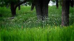 Ukrainian landscape, nature and landscape of South-east Ukraine Stock Footage
