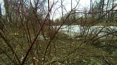 Bushes and branches without leaves Stock Footage