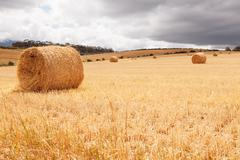 Hay bales laying in field under stormy skies Stock Photos