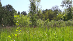 Forest green glade on a sunny day. Stock Footage