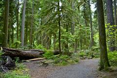 Stock Photo of montana forest in summer - glacier national park, montana, usa. forests photo