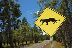 Cougar crossing - mountain lion xing traffic sign in arizona, usa. Kuvituskuvat