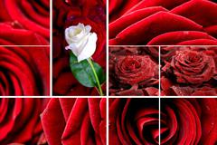 Lovely roses mosaic. red roses and roses petals composition. floral mosaics c Stock Photos