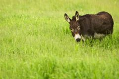 donkey in grass. farm pasture. agriculture photo collection. - stock photo