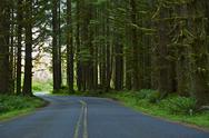 Stock Photo of washington forest road. washington state photo collection.