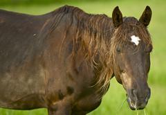 horse closeup - farm animals photo collection. - stock photo