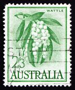 Postage stamp Australia 1959 Golden Wattle, Tree Stock Photos