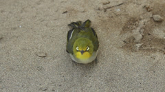 sickness young bird - stock footage