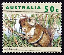 Postage stamp Australia 1992 Koala, Herbivorous Marsupial Stock Photos