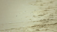 Crabs striding on the sand of the beach. - stock footage