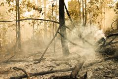 destroyed by burning tropical forest - stock photo