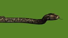 Snake&jungle carpet python slide attack,sliding decorative non venomous. - stock footage