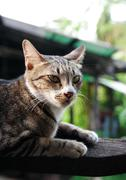 brown cat on the wood - stock photo