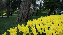 Yellow ottoman tulips, Istanbul, tulips festival, happy, people walking Stock Footage