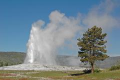 Old faithful geyser, yellowstone national park, wyoming Stock Photos