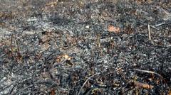 Burned grass, ash coals. Stock Footage