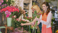 Stock Video Footage of MS of Florist overlooking as young Apprentice gathers flowers for an arrangement