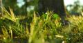 4K Green Grasses 01 Dolly R Macro Footage