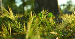 4K Green Grasses 01 Dolly R Macro Stock Footage
