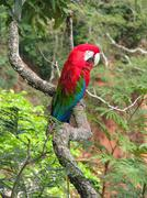 beautiful wild red macaw, seen at buraco das araras (macaws hole), near bonit - stock photo