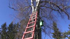 Wooden ladder on birch tree in spring near old nesting box Stock Footage