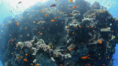 POV - scuba diver surfacing close to coral reef wall - 29.97fps Stock Footage