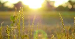4K Green Grasses 04 Dolly R Macro Stock Footage