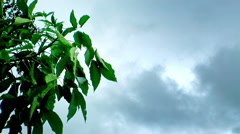 Tree leaves at cloud sky. - stock footage