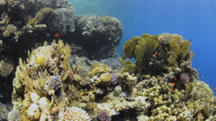 POV - Swimming over tropical coral reef - 29.97fps Stock Footage