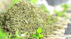 Dried winter savory (not loopable) Stock Footage