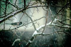 Bird in a Snowstorm Stock Photos