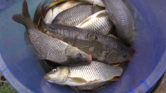 Live fish in a bucket while fishing Stock Footage