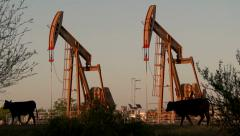 Two oil pumpjacks pumping with cows in foreground Stock Footage