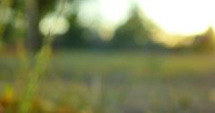 4K Green Grasses 10 Dolly L Macro Stock Footage