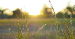 4K Green Grasses 11 Dolly L Macro Stock Footage