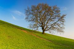 lonely tree in the slope - stock photo