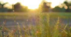 4K Green Grasses 12 Dolly L Macro Stock Footage