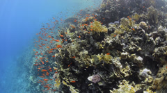 POV - Swimming over tropical coral reef - 29.97fps - stock footage