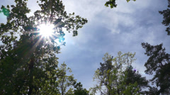 The sun is shining through the trees in the forest. Timelapse. - stock footage