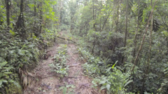 Flying low over a logging trail in tropical rainforest Stock Footage