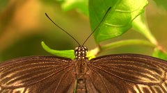 Macro of a butterfly Stock Footage