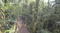 Flying through tropical rainforest above a logging trail Stock Footage