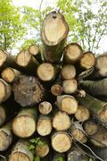 broadleaf forest - pile of tree boles - stock photo