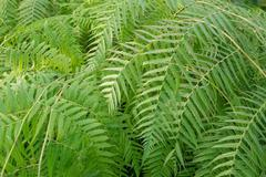 Ferns picture Stock Photos