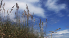 1624 Beach with Long Grass Blue Skys Stock Footage