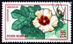 Stock Photo of Postage stamp Romania 1965 Tree Cotton, Shrub