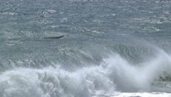 California Grey Whale in The Surf Stock Footage
